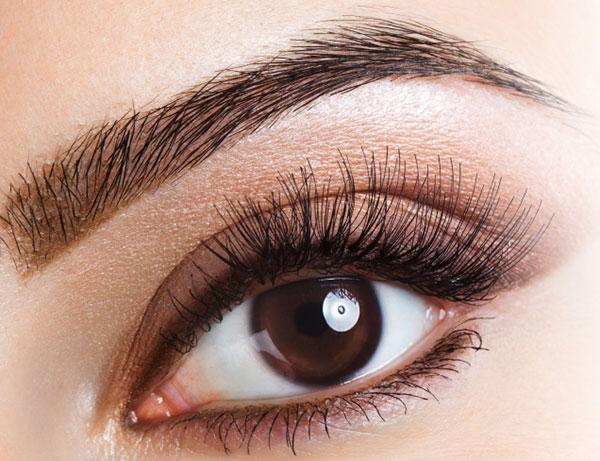 eyebrow & lashes tint & shape